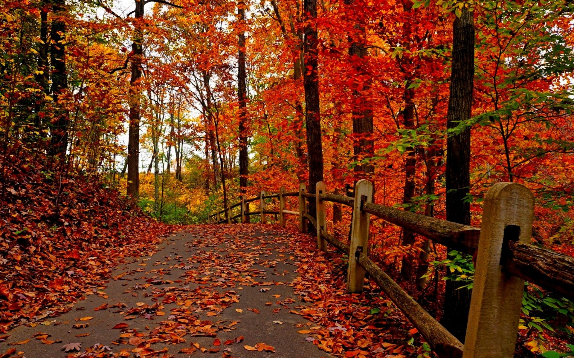 Collection Of Some Best Scene Autumn Season HD Wallpapers