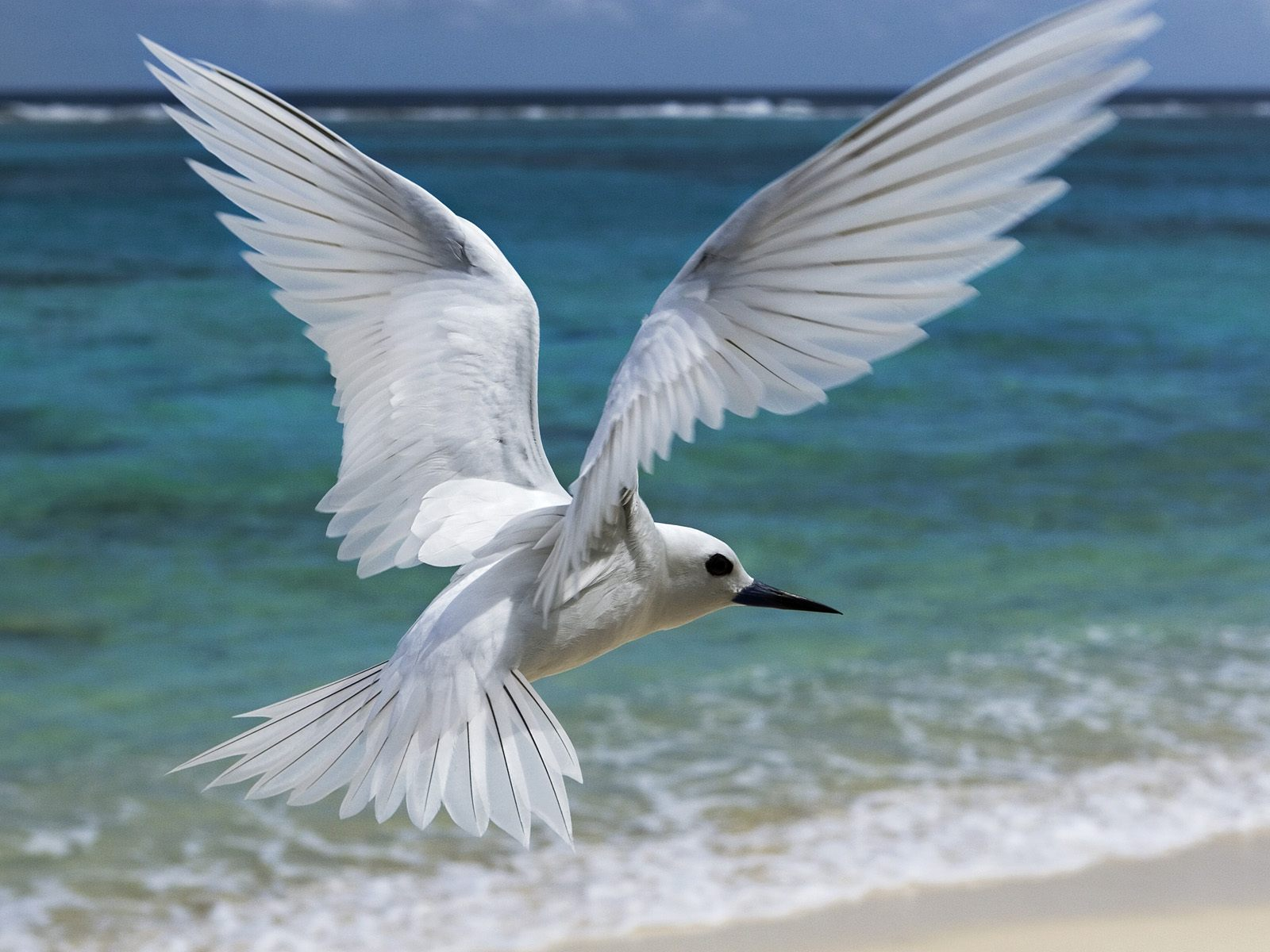 Seagull Flying On The Beach New HD Wallpapers - All HD ...