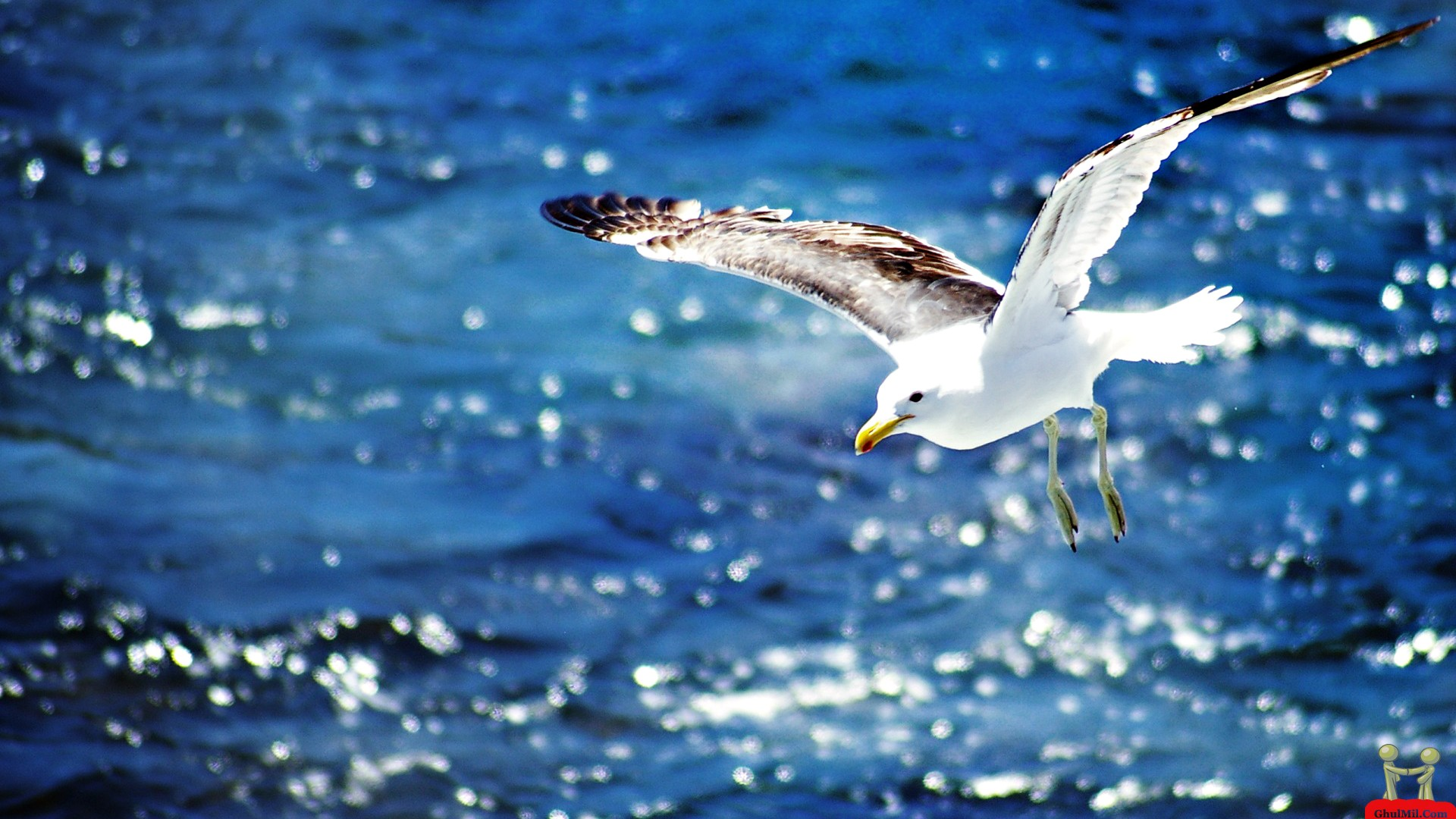 Freedom Birds Flying Hd Wallpaper Bird: Seagull Flying On The Beach New HD Wallpapers