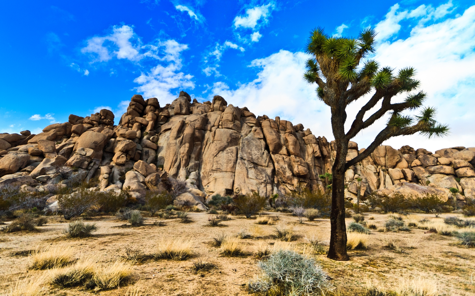 joshua tree national park Joshua tree national park resorts & hotels with spas: browse our selection of over 1826 hotels in joshua tree national park conveniently book with expedia to save.