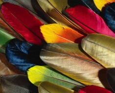 Feather (2)