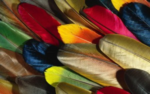 Feather Amazing High Definition Wallpapers 2015