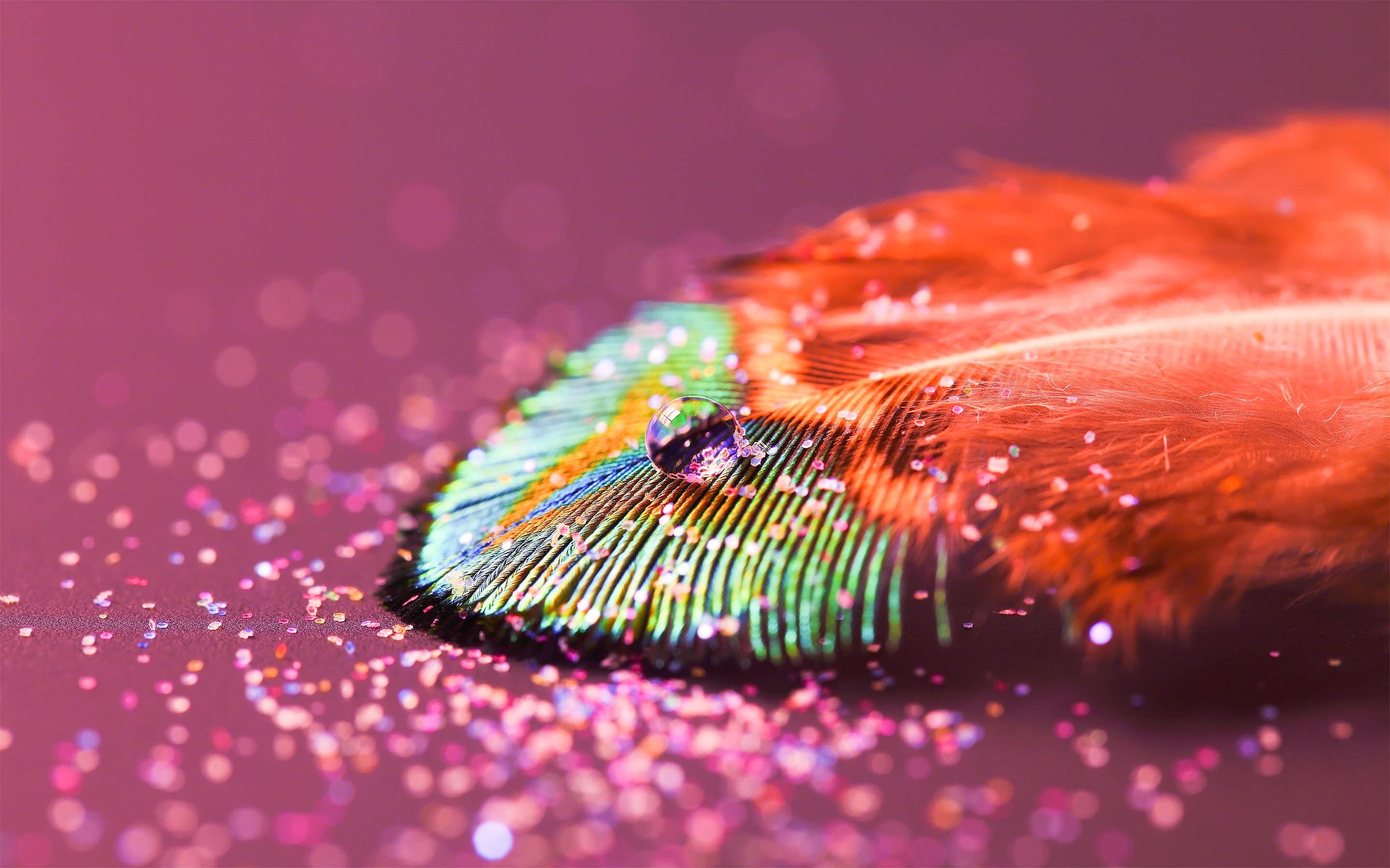 Feather Amazing High Definition Wallpapers 2015 All Hd