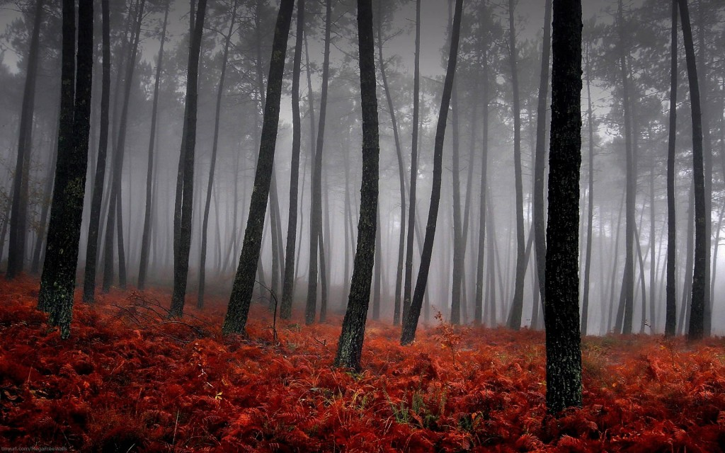 Forest (5)
