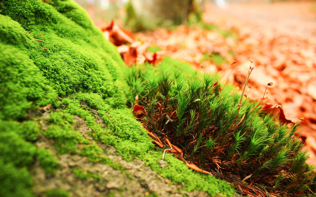 Moss New Awesome Hd Wallpapers  High Quality All