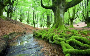 Moss New Awesome HD Wallpapers 2015 (High Quality)