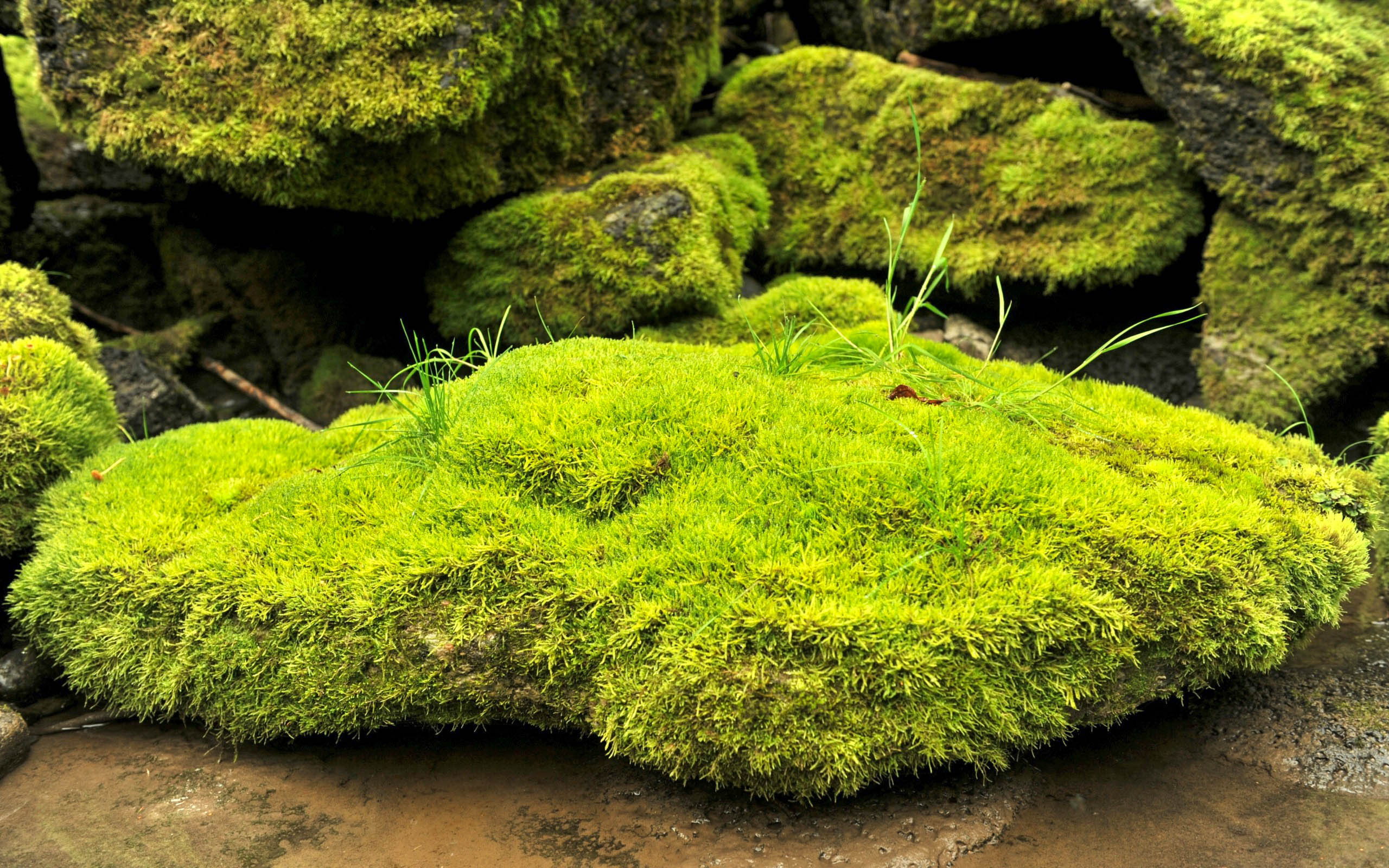 moss new awesome hd wallpapers 2015  high quality