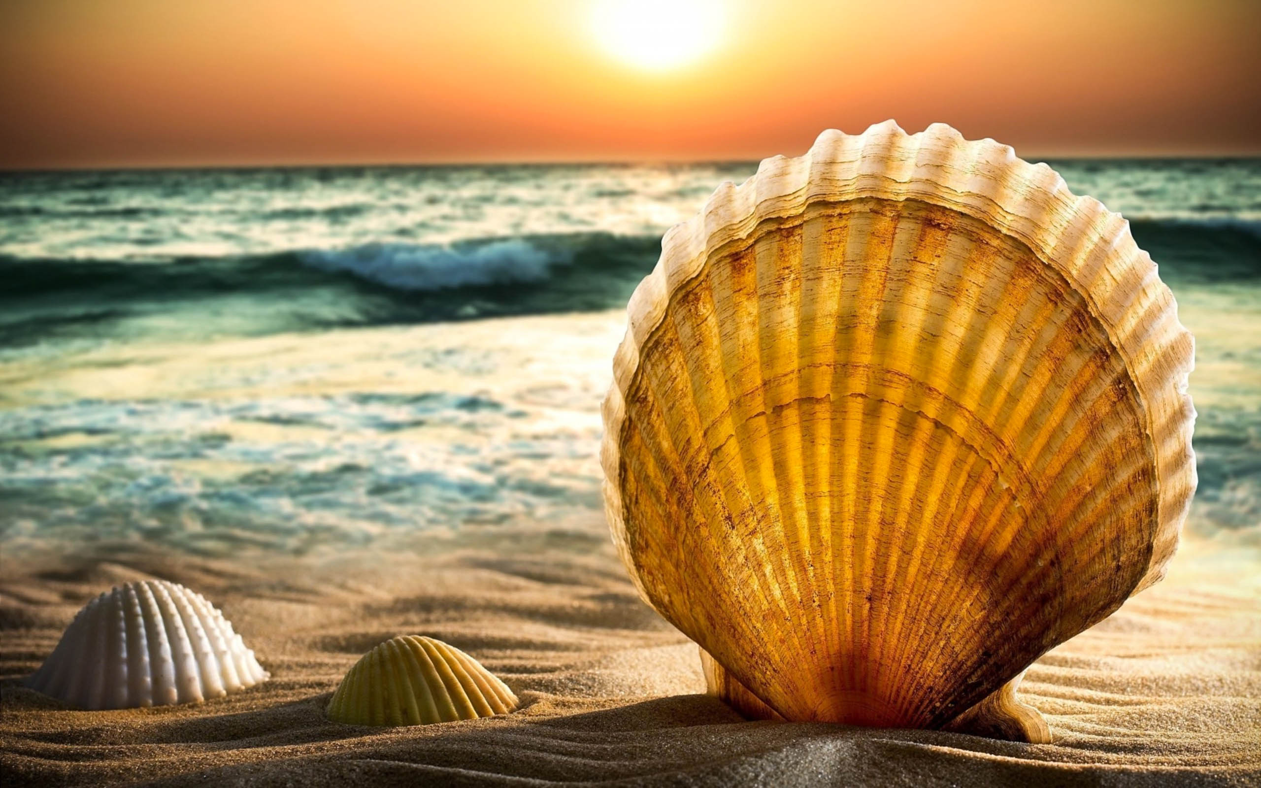 Shell awesome hd wallpapers 2015 high quality all hd for Quality wallpaper