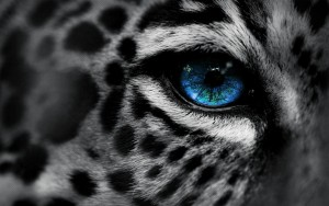 Leopard Awesome High Quality HD Wallpapers ..