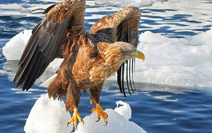 Eagle Some Amazing HD Wallpapers & Images