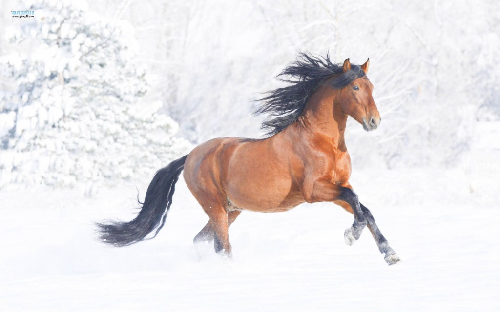 horse wallpaper awesome pair - photo #40
