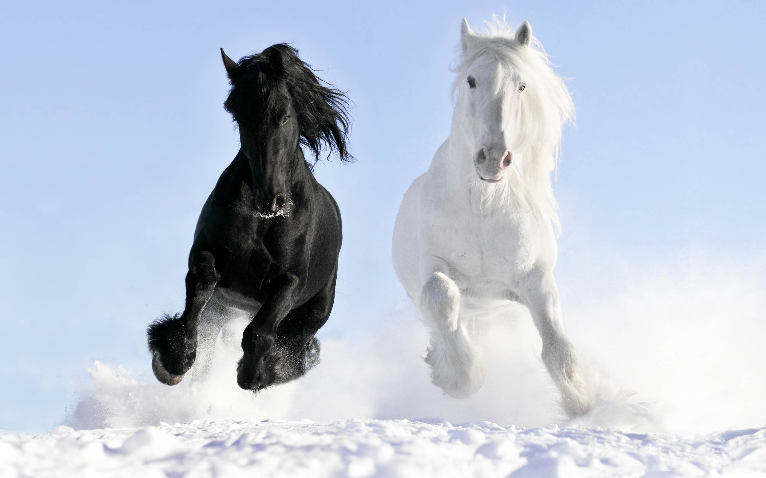 Horses 2017 hd wallpapers collections beautiful horses some awesome hd wallpapers altavistaventures Gallery
