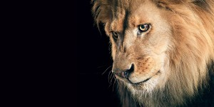 Lion The King Of Jungle Images, Pictures In High Resolution