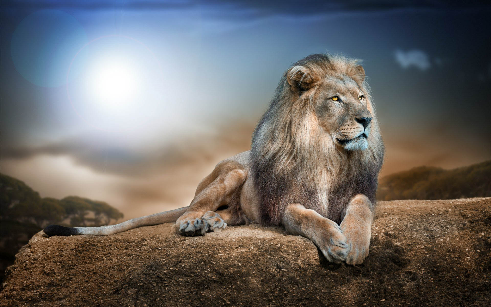 Amazing Wallpaper High Resolution Lion - Lion-5  Perfect Image Reference_197517.jpg