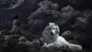 Wolf Awesome  HD Wallpapers Pictures (High Quality)