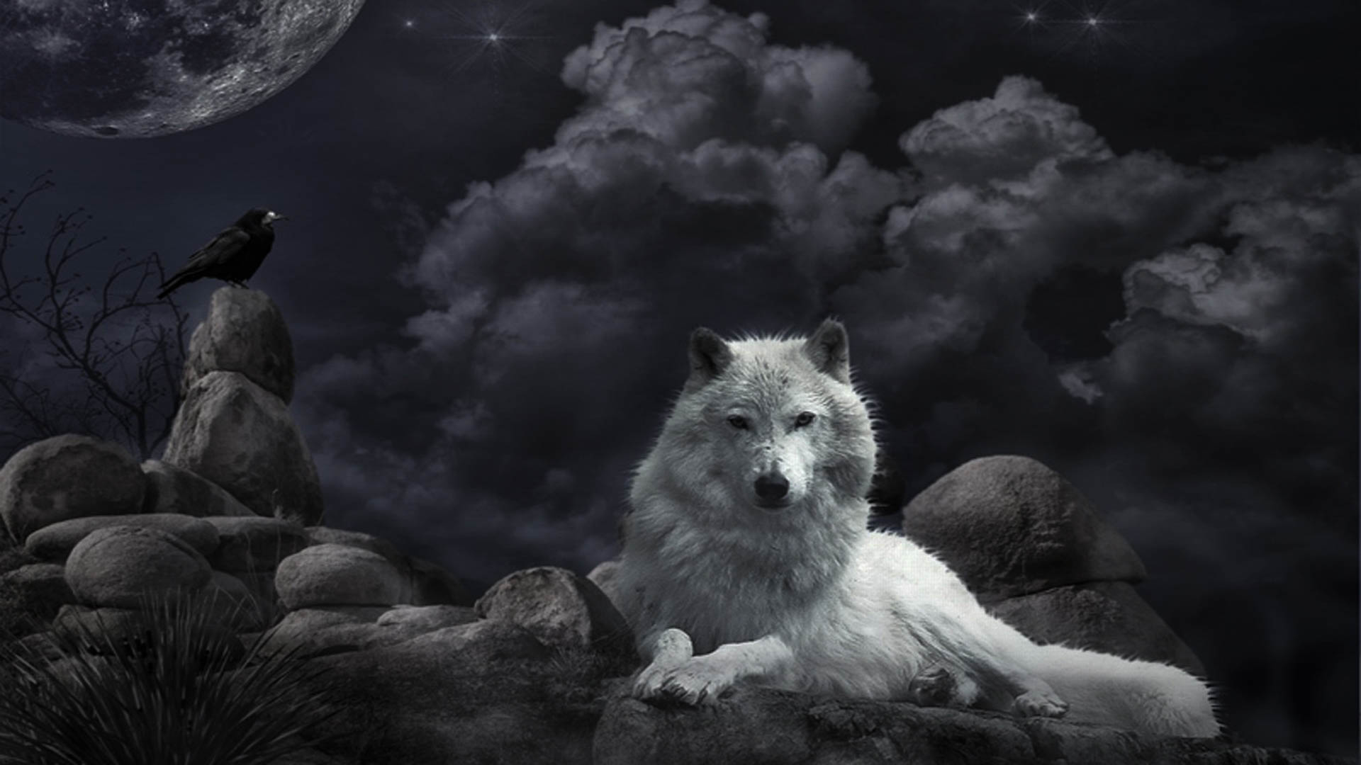 wolf awesome hd wallpapers pictures (high quality) - all hd wallpapers