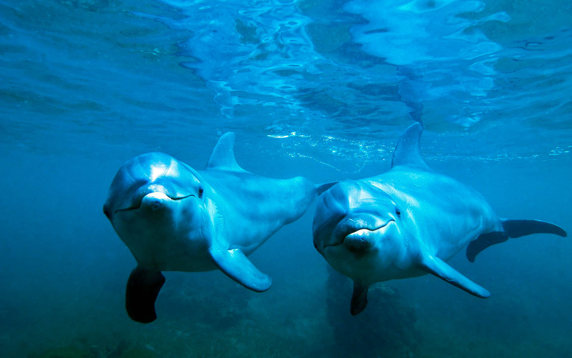 Dolphin Awesome HD Pictures, Images & Backgrounds (High ...