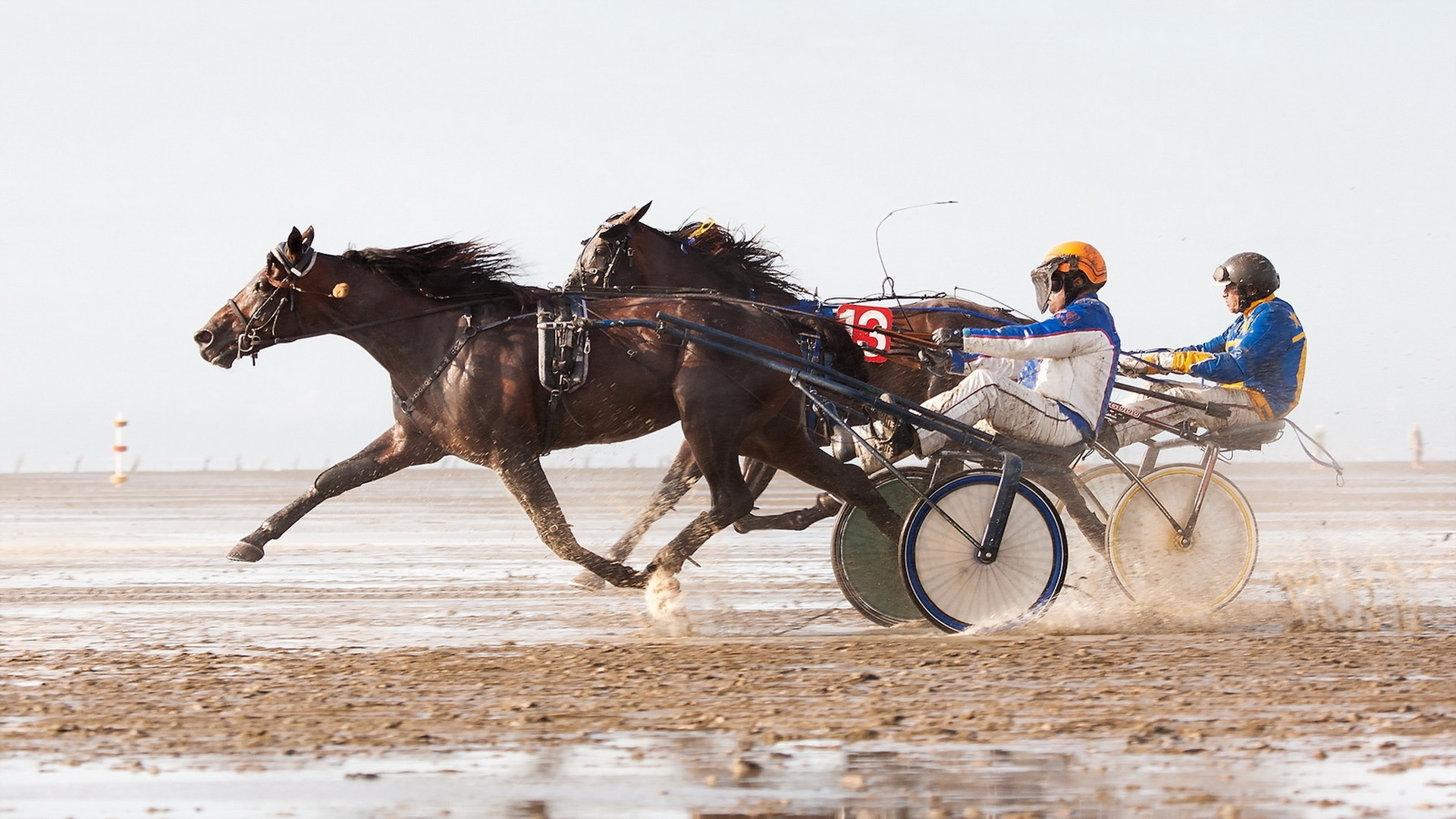 Horse Racing Awesome Hd Wallpapers - All Hd Wallpapers-6080
