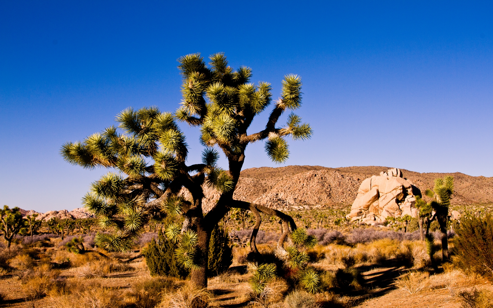 Hd Wallpapers Of S: Joshua Tree National Park HD Wallpapers