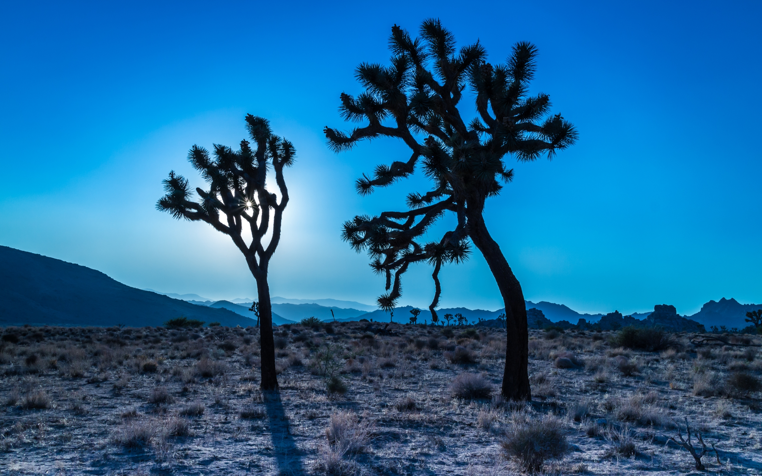 Joshua Tree National Park Hd Wallpapers All Hd Wallpapers