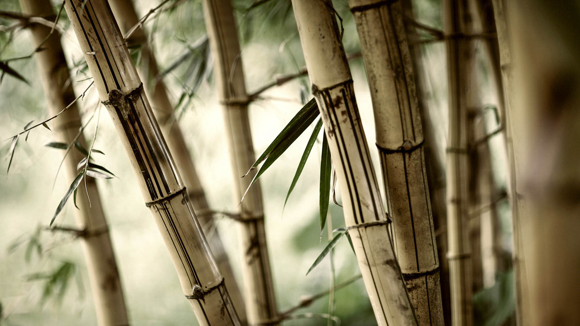 background wallpapers new: Bamboo New HD Wallpapers 2015 (High Quality)