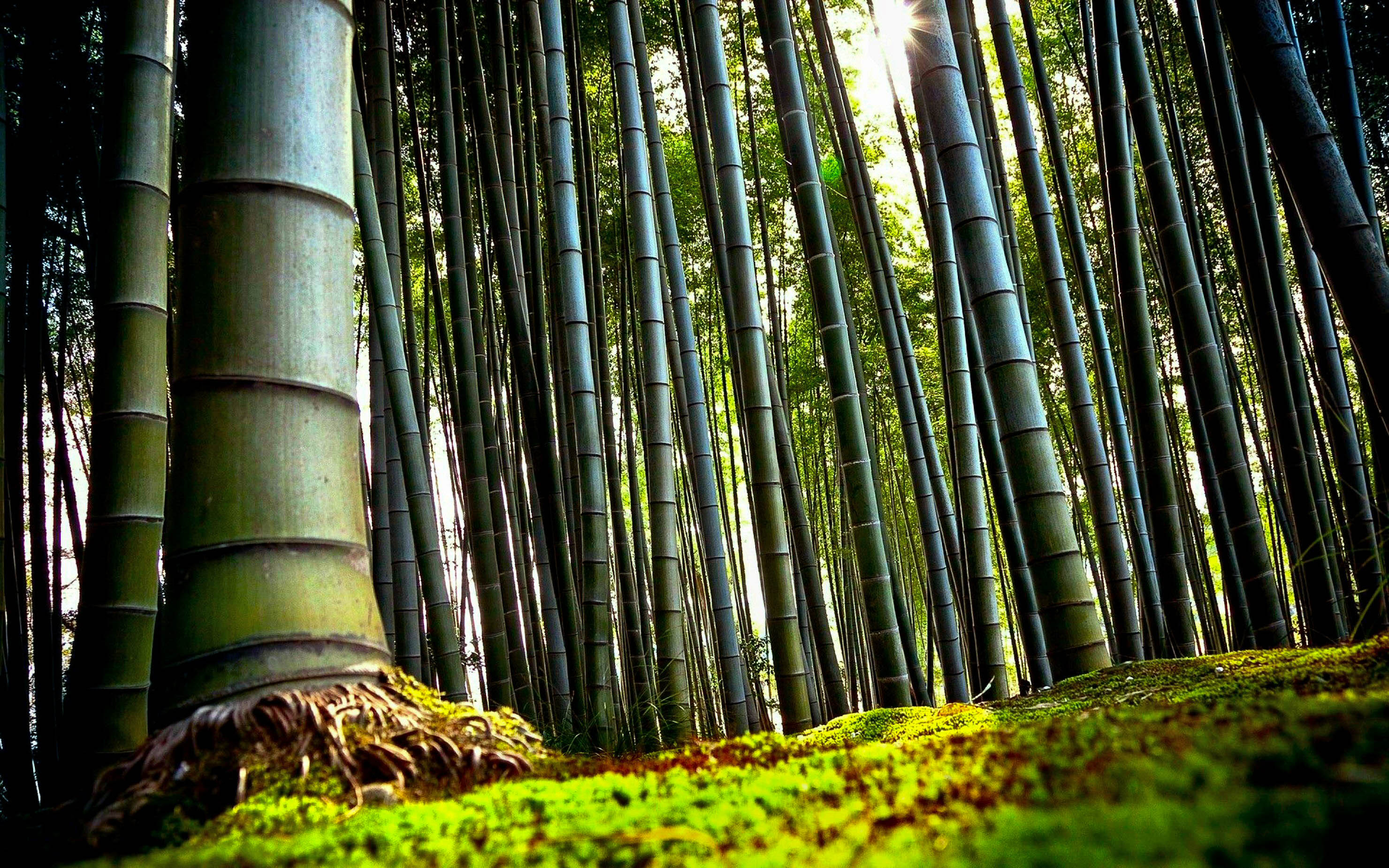 Bamboo New HD Wallpapers 2015 (High Quality) - All HD ...