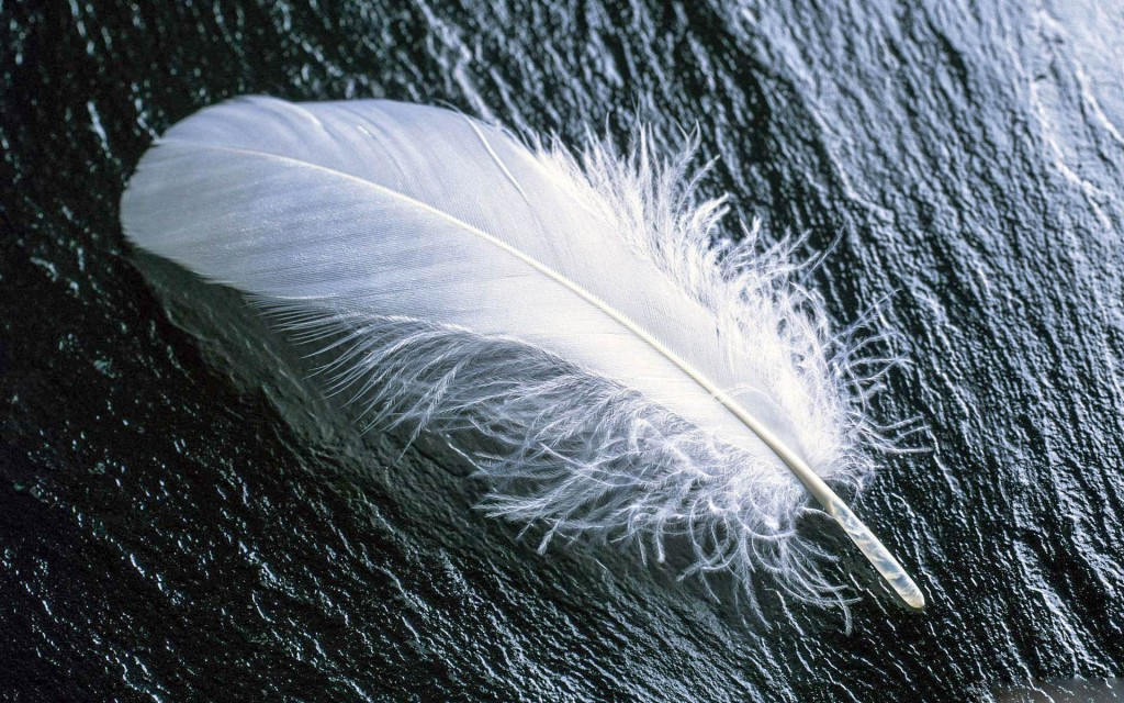 Feather (3)