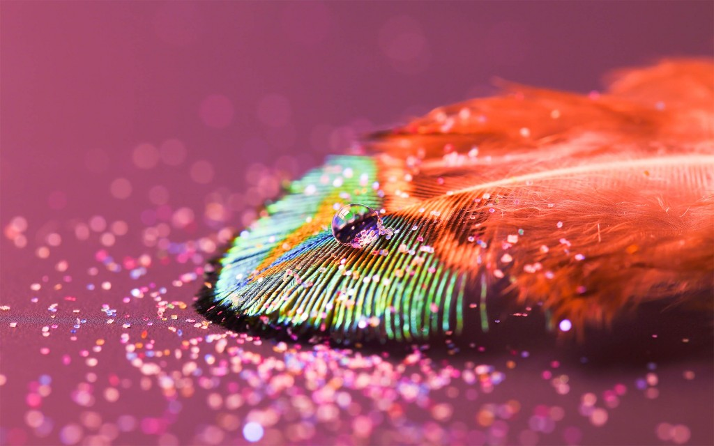 Feather (4)