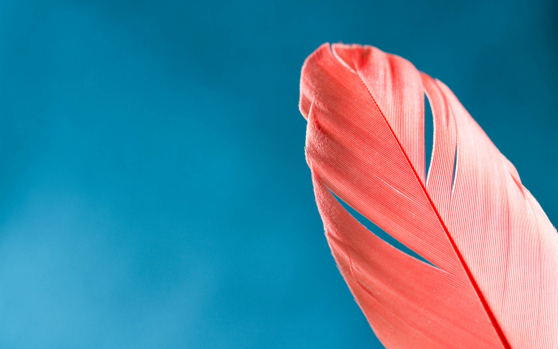Feather Amazing High Definition Wallpapers 2015 - All HD ...