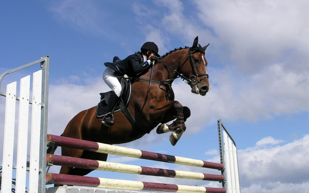 Show Jumping (5)