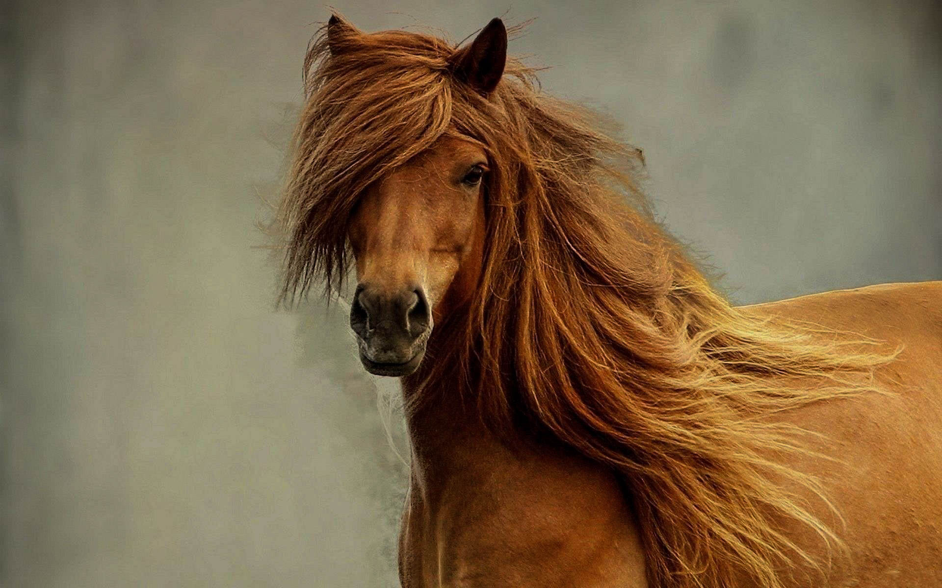 Horses 2017 Hd Wallpapers Collections