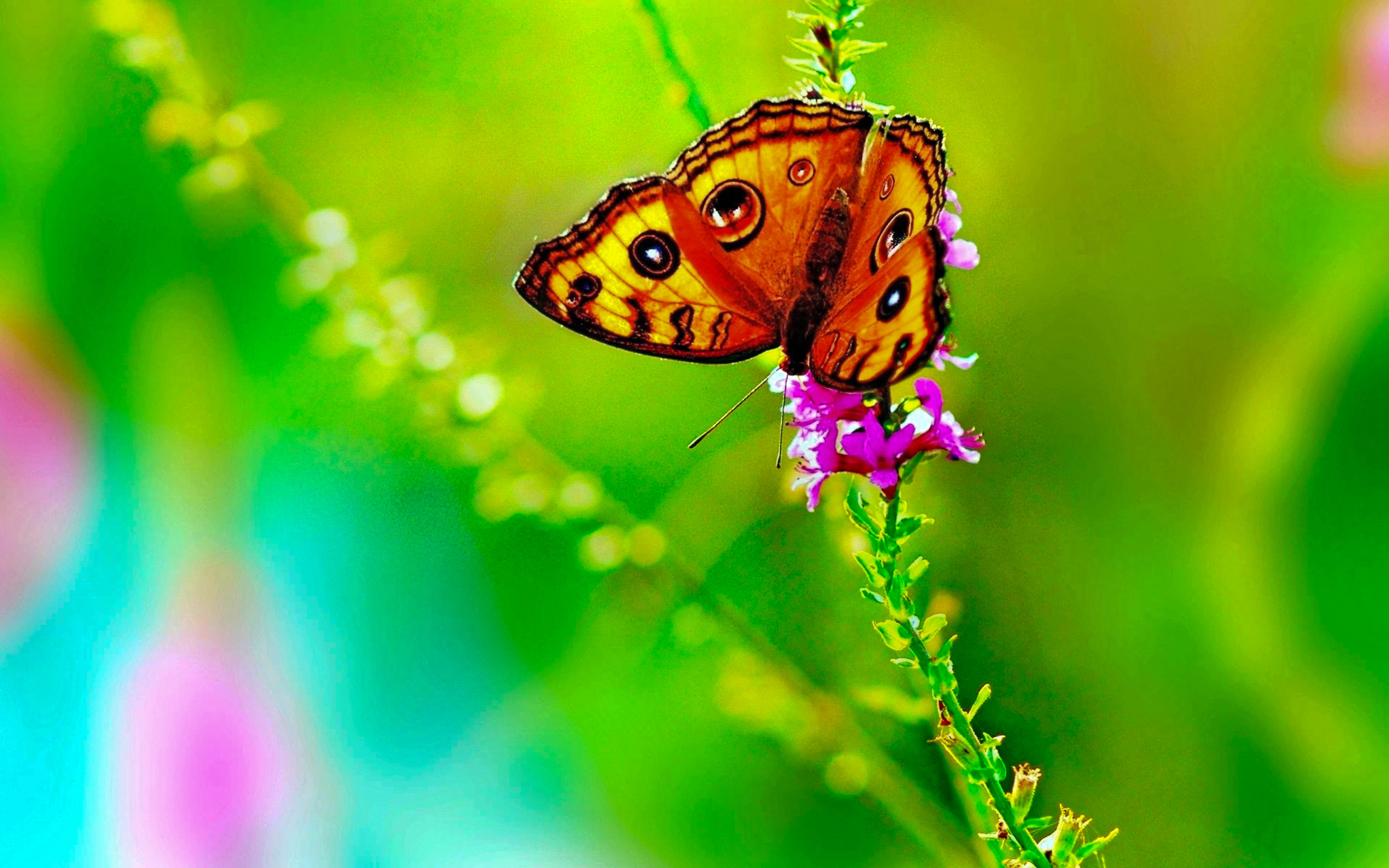 Butterfly Buetiful HD Wallpapers & Pictures (High Quality ...