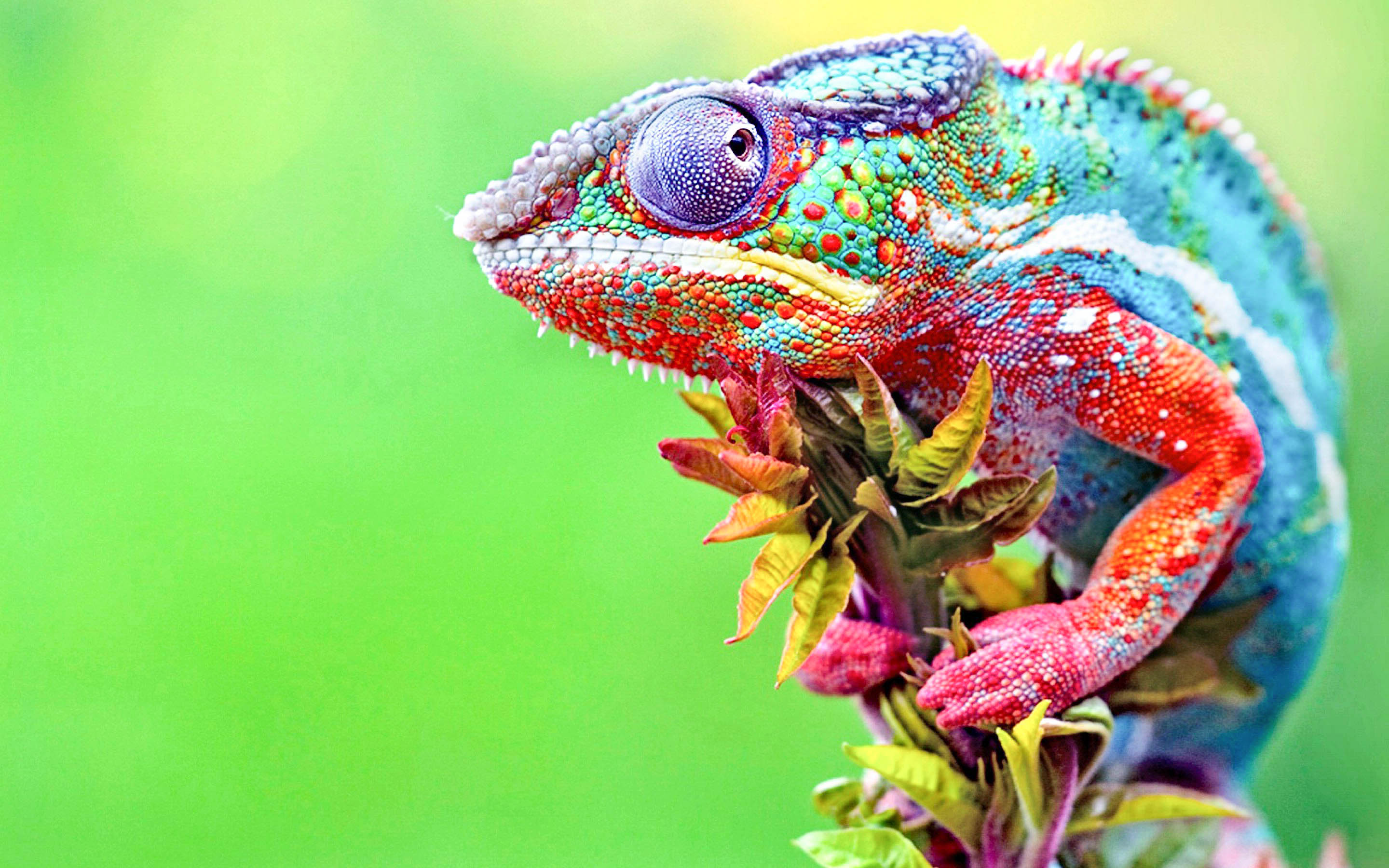 Chameleon Anime New HD Wallpapers & Backgrounds (High