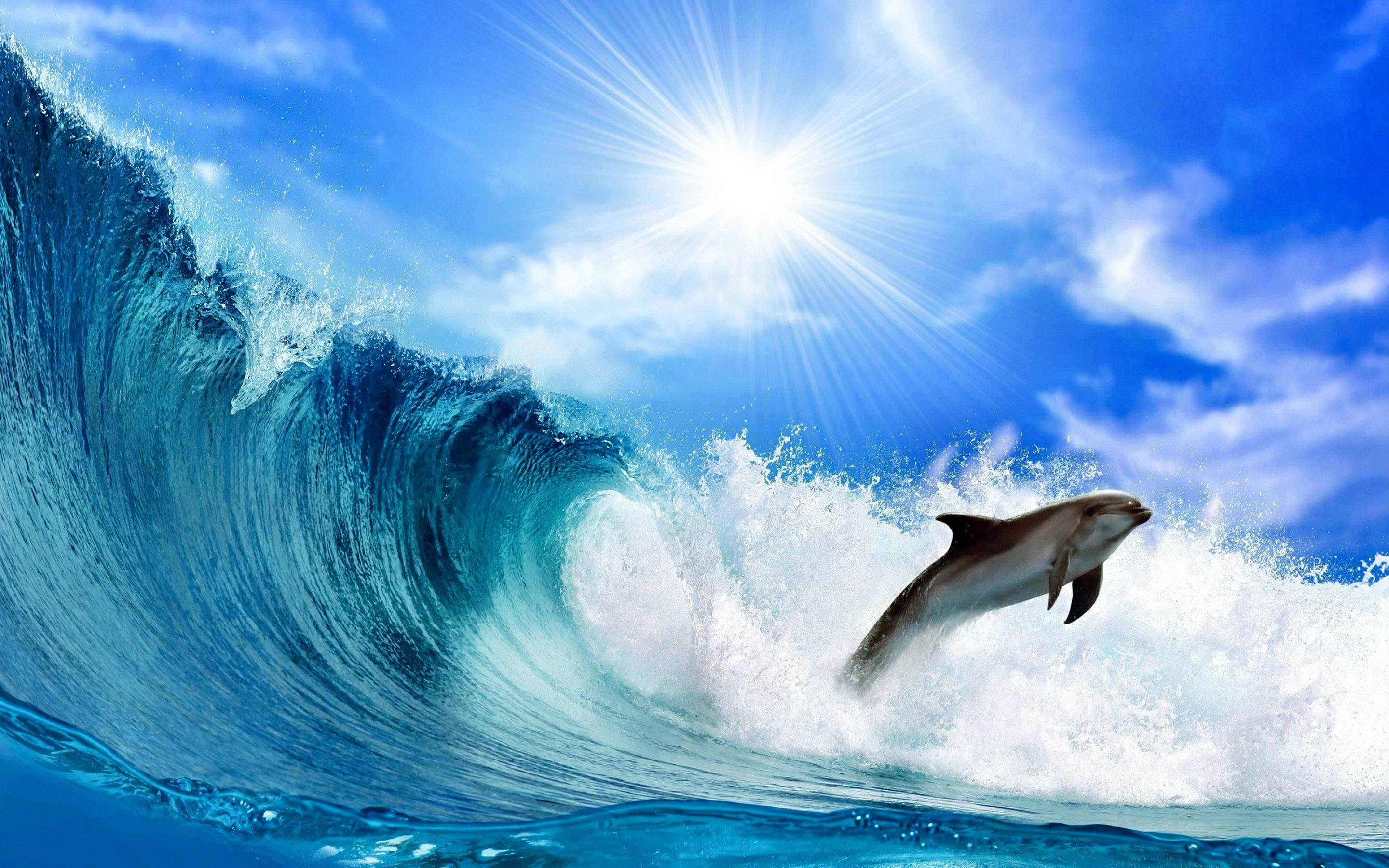 Hd Wallpapers: Dolphin Awesome HD Pictures, Images & Backgrounds (High