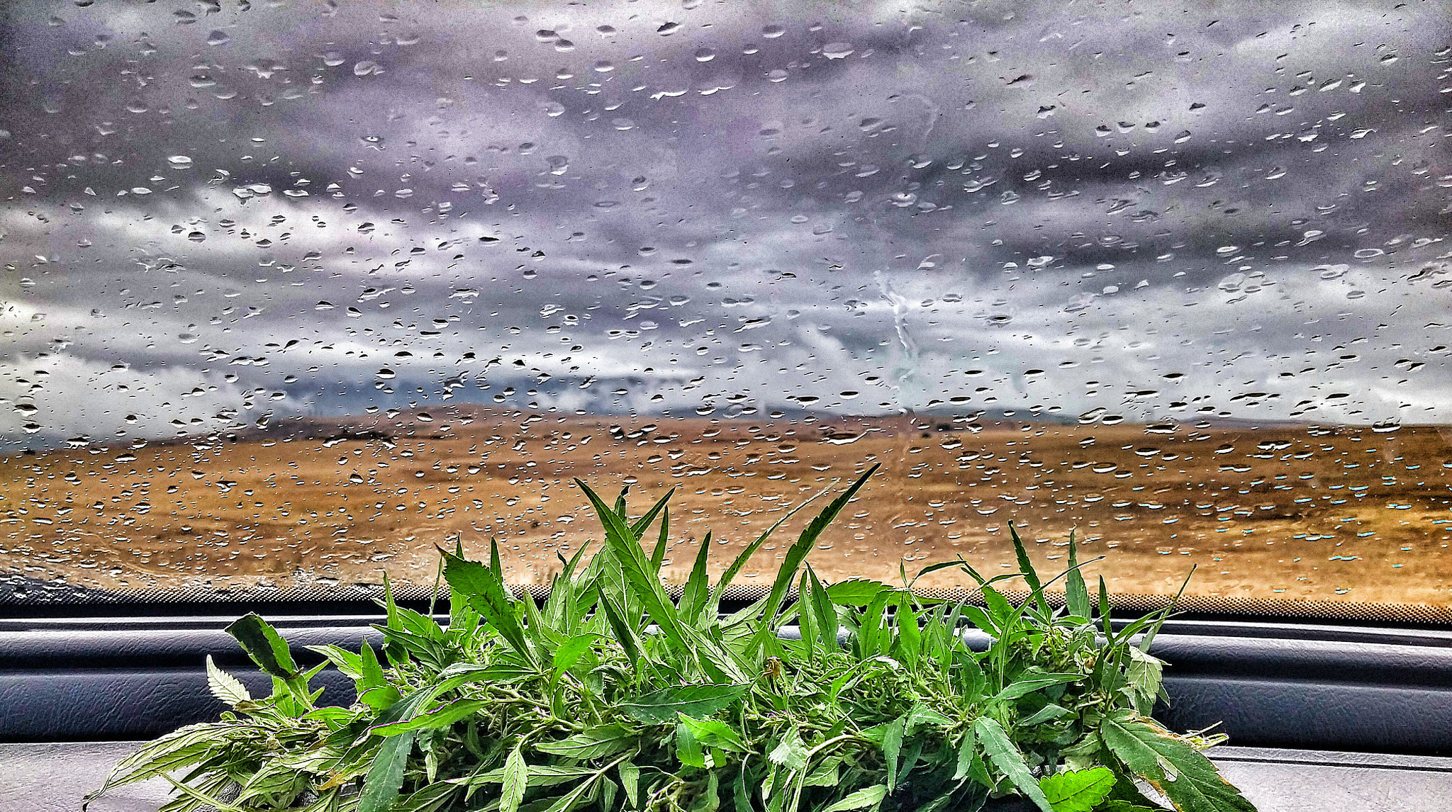 weed and rain picture